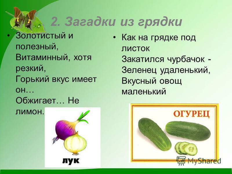 2. Загадки из грядки Золотистый и полезный, Витаминный, хотя резкий, Горький вкус имеет он… Обжигает… Не лимон. Как на грядке под листок Закатился чурбачок - Зеленец удаленький, Вкусный овощ маленький