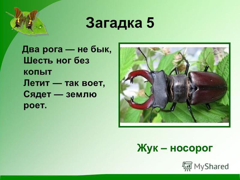Загадка 5 Два рога не бык, Шесть ног без копыт Летит так воет, Сядет землю роет. Жук – носорог