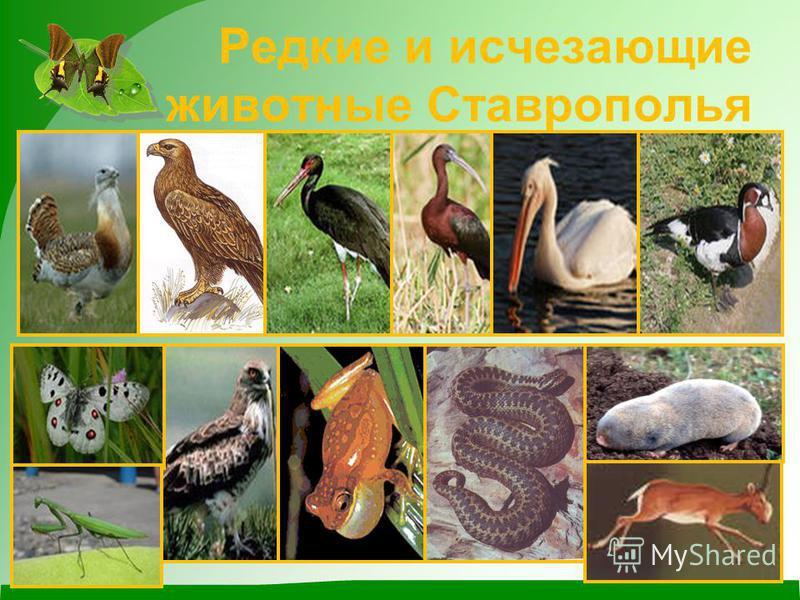Редкие и исчезающие животные Ставрополья