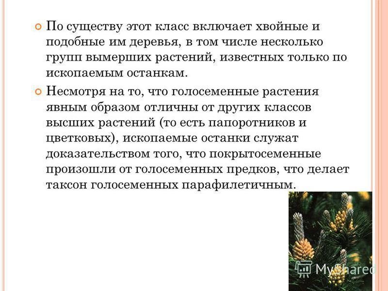 По существу этот класс включает хвойные и подобные им деревья, в том числе несколько групп вымерших растений, известных только по ископаемым останкам. Несмотря на то, что голосеменные растения явным образом отличны от других классов высших растений (
