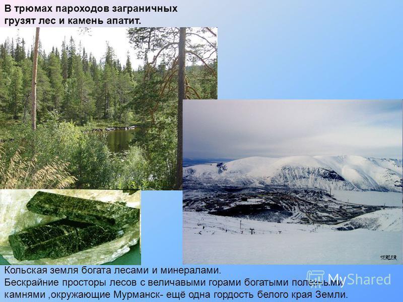 В трюмах пароходов заграничных грузят лес и камень апатит. Кольская земля богата лесами и минералами. Бескрайние просторы лесов с величавыми горами богатыми полезными камнями,окружающие Мурманск- ещё одна гордость белого края Земли.