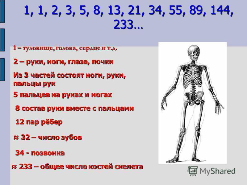 1 – туловище, голова, сердце и т.д. 2 – руки, ноги, глаза, почки Из 3 частей состоят ноги, руки, пальцы рук 5 пальцев на руках и ногах 8 состав руки вместе с пальцами 12 пар рёбер 32 – число зубов 32 – число зубов 34 - позвонка 233 – общее число кост