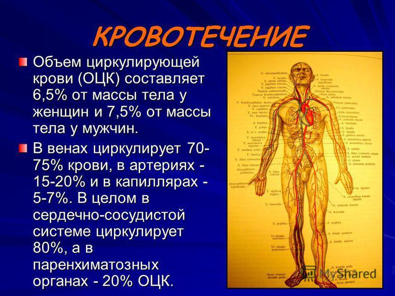 КРОВОТЕЧЕНИЕ Объем циркулирующей крови (ОЦК) составляет 6,5% от массы тела у женщин и 7,5% от массы тела у мужчин. В венах циркулирует 70- 75% крови, в артериях - 15-20% и в капиллярах - 5-7%. В целом в сердечно-сосудистой системе циркулирует 80%, а