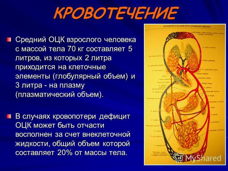 КРОВОТЕЧЕНИЕ Средний ОЦК взрослого человека с массой тела 70 кг составляет 5 литров, из которых 2 литра приходится на клеточные элементы (глобулярный объем) и 3 литра - на плазму (плазматический объем). В случаях кровопотери дефицит ОЦК может быть от