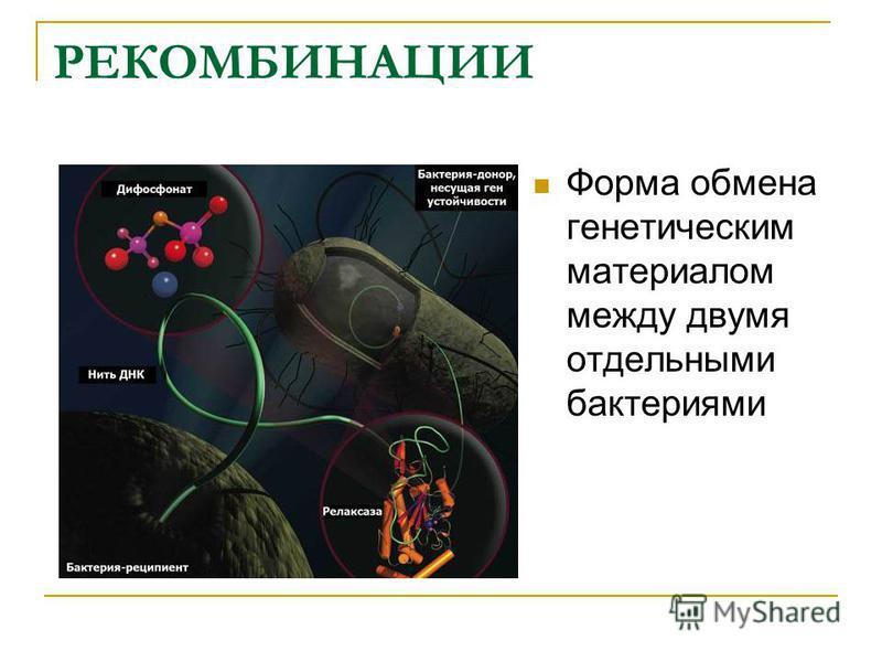РЕКОМБИНАЦИИ Форма обмена генетическим материалом между двумя отдельными бактериями