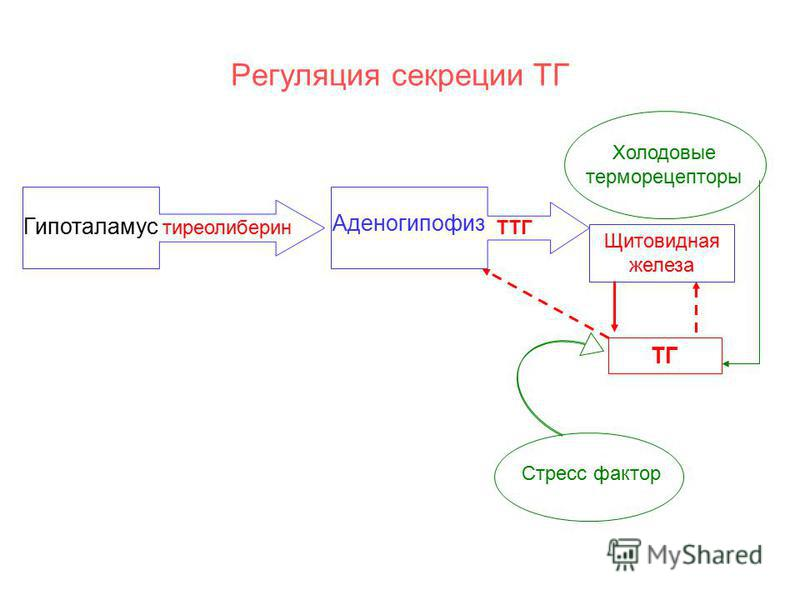 Терморецептор фото
