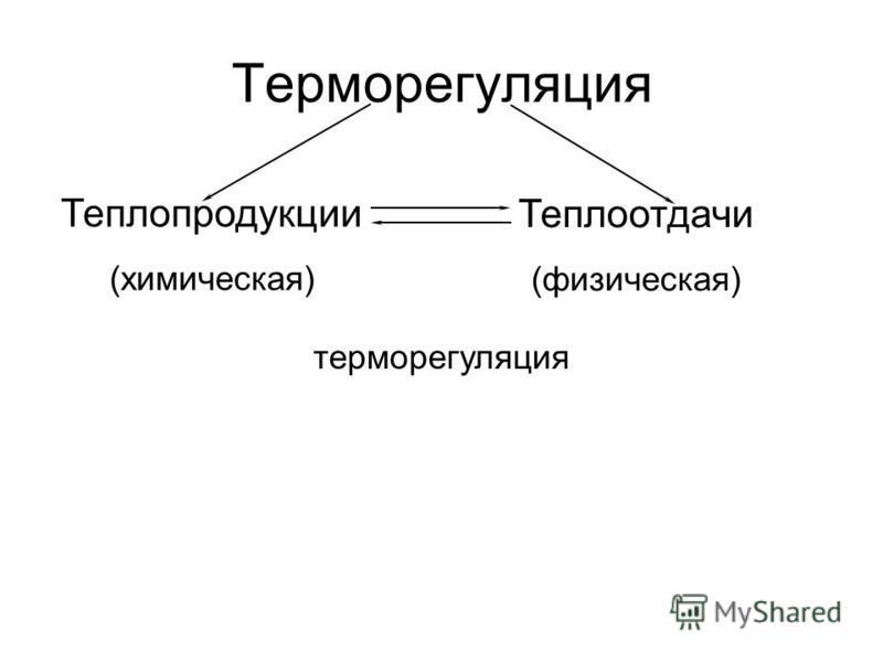 Теплопродукции (химическая) Теплоотдачи (физическая) терморегуляция