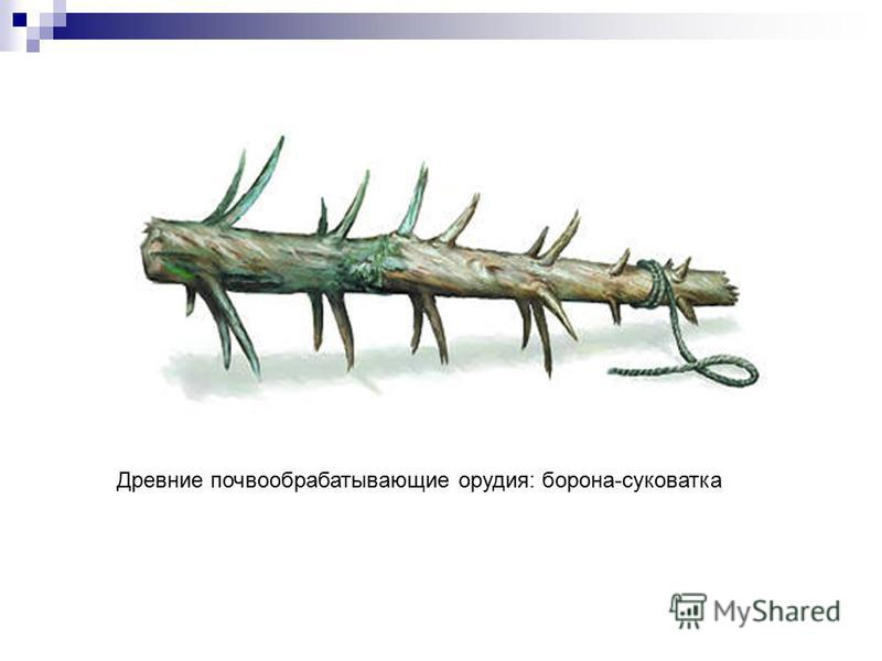 Древние почвообрабатывающие орудия: борона-суковатка