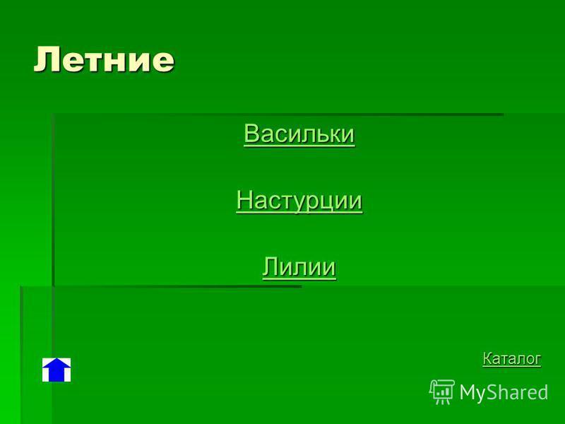 Летние Васильки Настурции Лилии Каталог