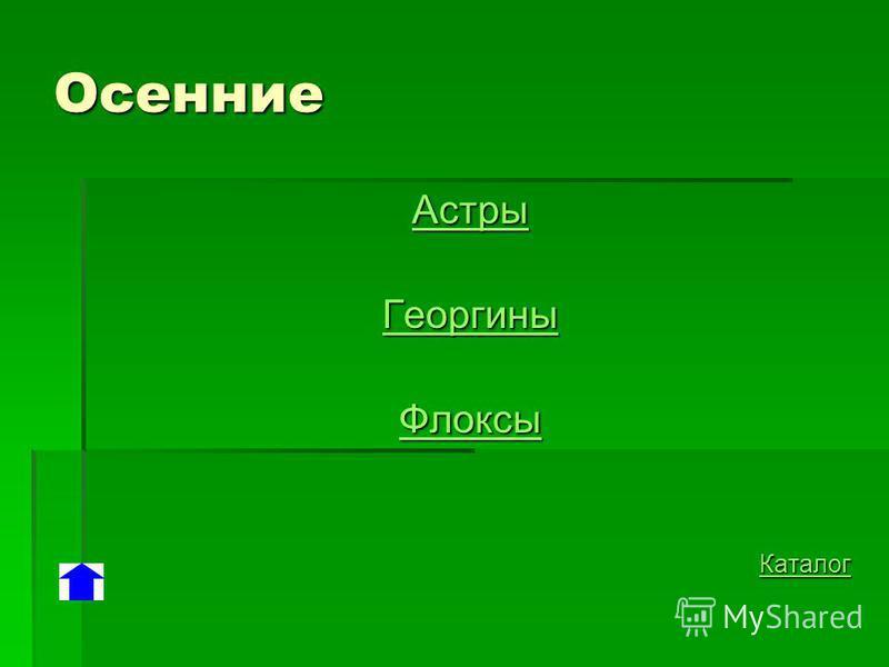 Осенние Астры Георгины Флоксы Каталог