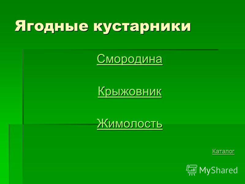 Ягодные кустарники Смородина Крыжовник Жимолость Каталог
