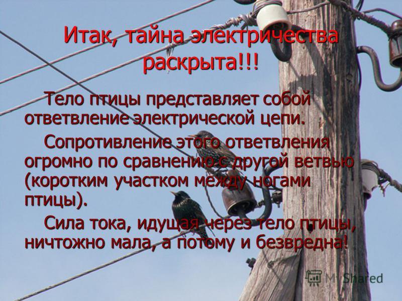 Итак, тайна электричества раскрыта!!! Тело птицы представляет собой ответвление электрической цепи. Сопротивление этого ответвления огромно по сравнению с другой ветвью (коротким участком между ногами птицы). Сила тока, идущая через тело птицы, ничто