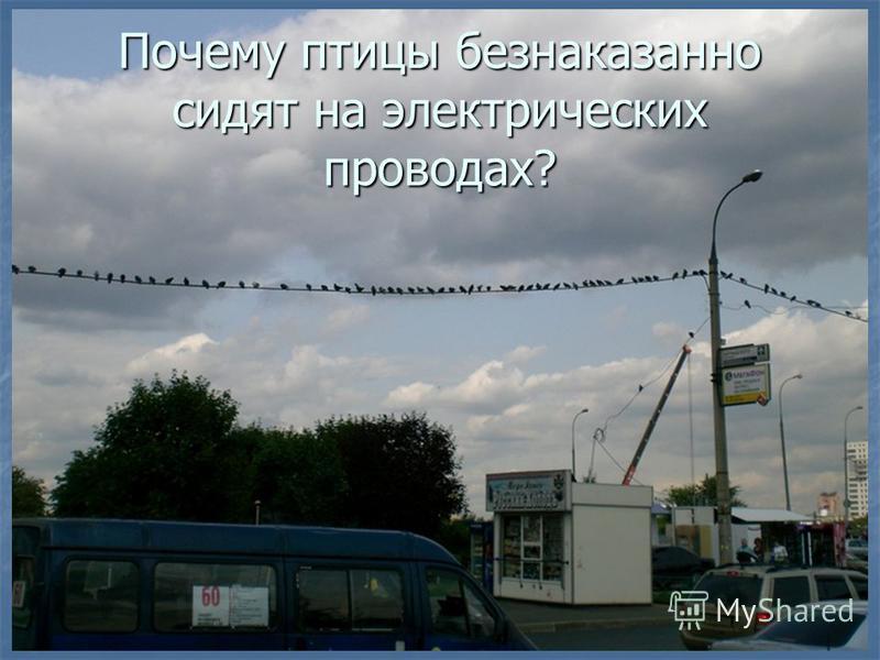 Почему птицы безнаказанно сидят на электрических проводах?
