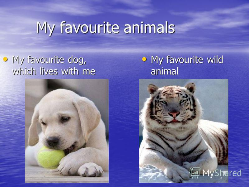 My favourite animals My favourite animals My favourite dog, which lives with me My favourite dog, which lives with me My favourite wild animal My favourite wild animal