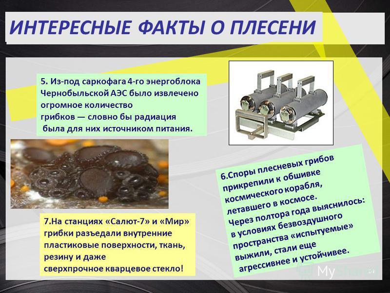 14 ИНТЕРЕСНЫЕ ФАКТЫ О ПЛЕСЕНИ 5. Из-под саркофага 4-го энергоблока Чернобыльской АЭС было извлечено огромное количество грибков словно бы радиация была для них источником питания. 6. Споры плесневых грибов прикрепили к обшивке космического корабля, л