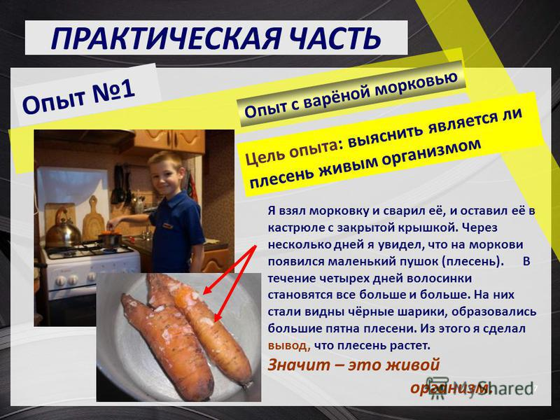 ПРАКТИЧЕСКАЯ ЧАСТЬ 17 Цель опыта: выяснить является ли плесень живым организмом Я взял морковку и сварил её, и оставил её в кастрюле с закрытой крышкой. Через несколько дней я увидел, что на моркови появился маленький пушок (плесень). В течение четыр