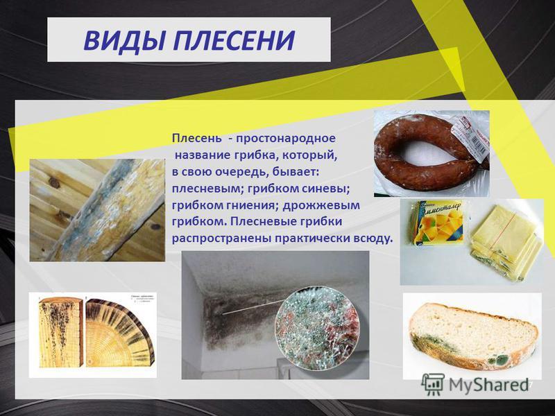 ВИДЫ ПЛЕСЕНИ 7 Плесень - простонародное название грибка, который, в свою очередь, бывает: плесневым; грибком синевы; грибком гниения; дрожжевым грибком. Плесневые грибки распространены практически всюду.