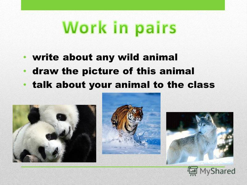 write about any wild animal draw the picture of this animal talk about your animal to the class