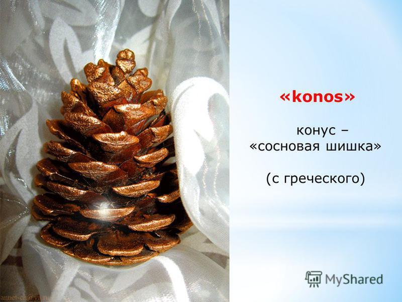 «konos» конус – «сосновая шишка» (с греческого)