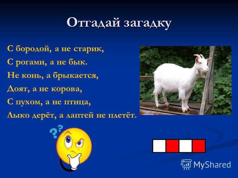 Отгадай загадку С бородой, а не старик, С рогами, а не бык. Не конь, а брыкается, Доят, а не корова, С пухом, а не птица, Лыко дерёт, а лаптей не плетёт.