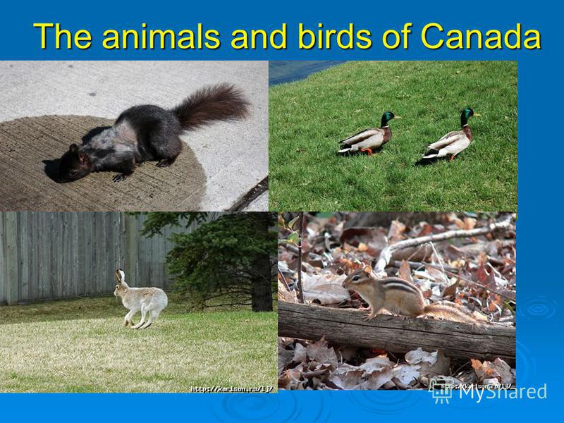 The animals and birds of Canada