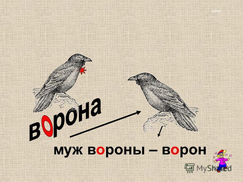 ворона муж вороны – ворон