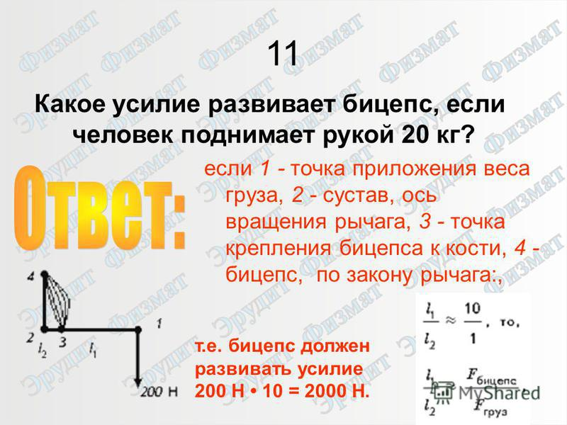 16 11 Какое усилие развивает бицепс, если человек поднимает рукой 20 кг? если 1 - точка приложения веса груза, 2 - сустав, ось вращения рычага, 3 - точка крепления бицепса к кости, 4 - бицепс, по закону рычага:, т.е. бицепс должен развивать усилие 20