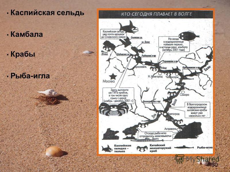 Каспийская сельдь Камбала Крабы Рыба-игла 30