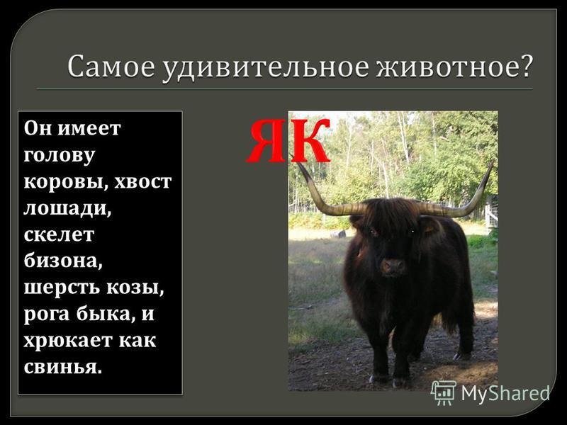 Он имеет голову коровы, хвост лошади, скелет бизона, шерсть козы, рога быка, и хрюкает как свинья.