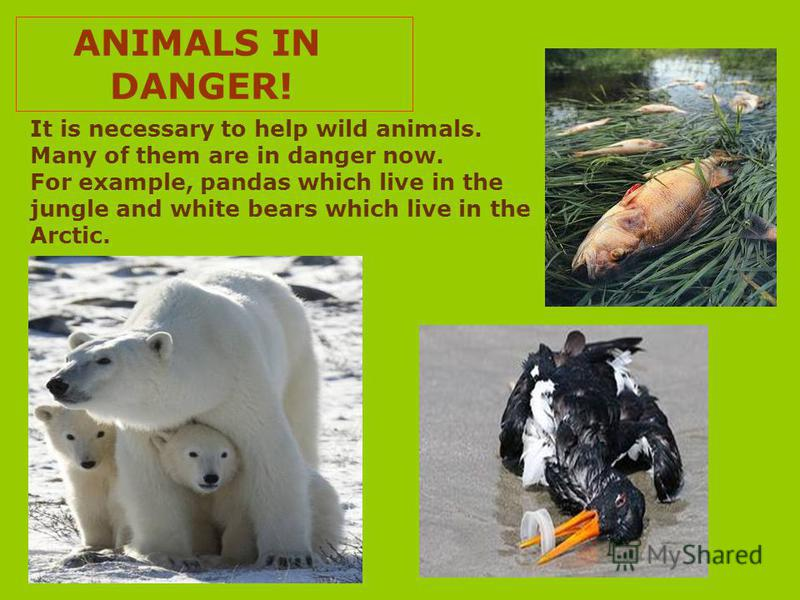 ANIMALS IN DANGER! It is necessary to help wild animals. Many of them are in danger now. For example, pandas which live in the jungle and white bears which live in the Arctic.