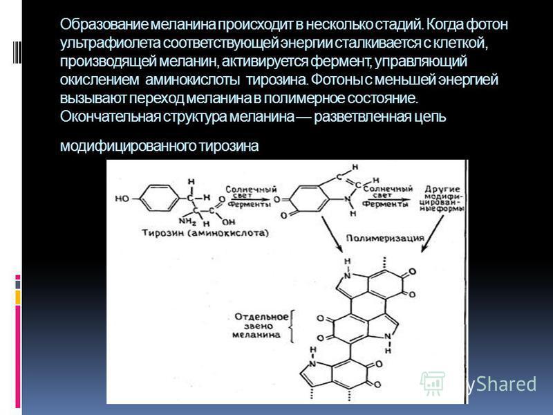 Образование меланина происходит в несколько стадий. Когда фотон ультрафиолета соответствующей энергии сталкивается с клеткой, производящей меланин, активируется фермент, управляющий окислением аминокислоты тирозина. Фотоны с меньшей энергией вызывают