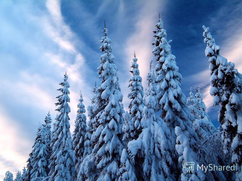 Зимняя нежность