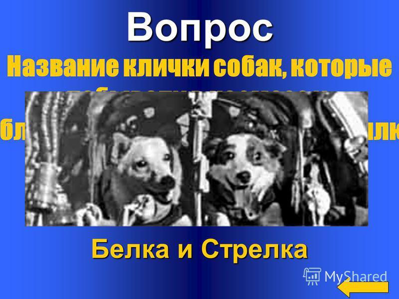 Вопрос Ответ Собака Лайка Первое живое существо, которое отправилось в космос, но Обратно не вернулось