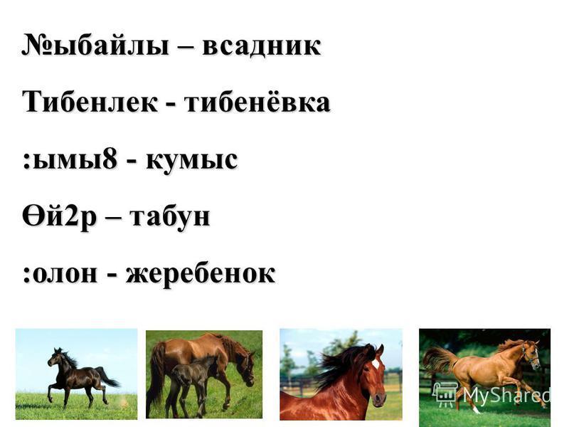 ыбайлы – всадник Тибенлек - тибенёвка :ымы8 - кумыс Өй2р – табун :олон - жеребенок