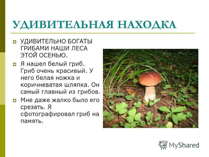 УДИВИТЕЛЬНАЯ НАХОДКА УДИВИТЕЛЬНО БОГАТЫ ГРИБАМИ НАШИ ЛЕСА ЭТОЙ ОСЕНЬЮ. Я нашел белый гриб. Гриб очень красивый. У него белая ножка и коричневатая шляпка. Он самый главный из грибов. Мне даже жалко было его срезать. Я сфотографировал гриб на память.