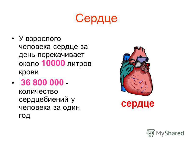 Сердце У взрослого человека сердце за день перекачивает около 10000 литров крови 36 800 000 - количество сердцебиений у человека за один год