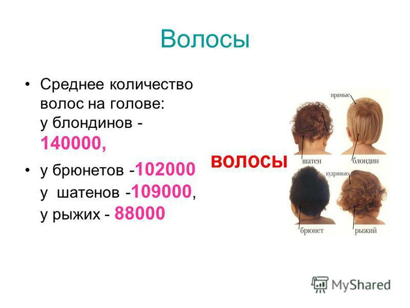 Волосы Среднее количество волос на голове: у блондинов - 140000, у брюнетов - 102000 у шатенов - 109000, у рыжих - 88000