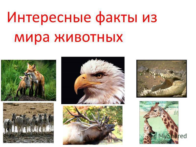 Интересные факты из мира животных