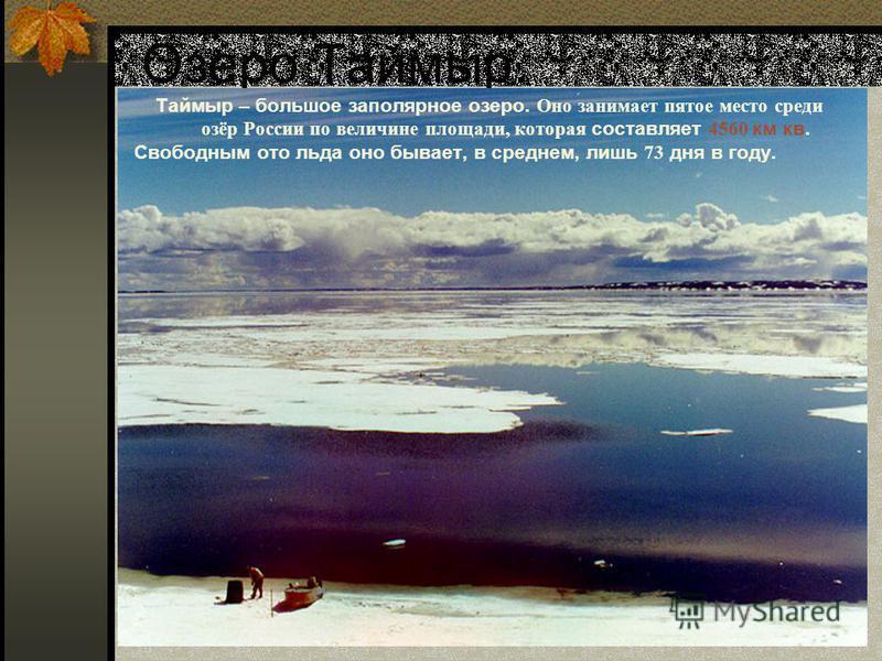 Озеро Таймыр. Таймыр – большое заполярное озеро. Оно занимает пятое место среди озёр России по величине площади, которая составляет 4560 км кв. Свободным ото льда оно бывает, в среднем, лишь 73 дня в году.