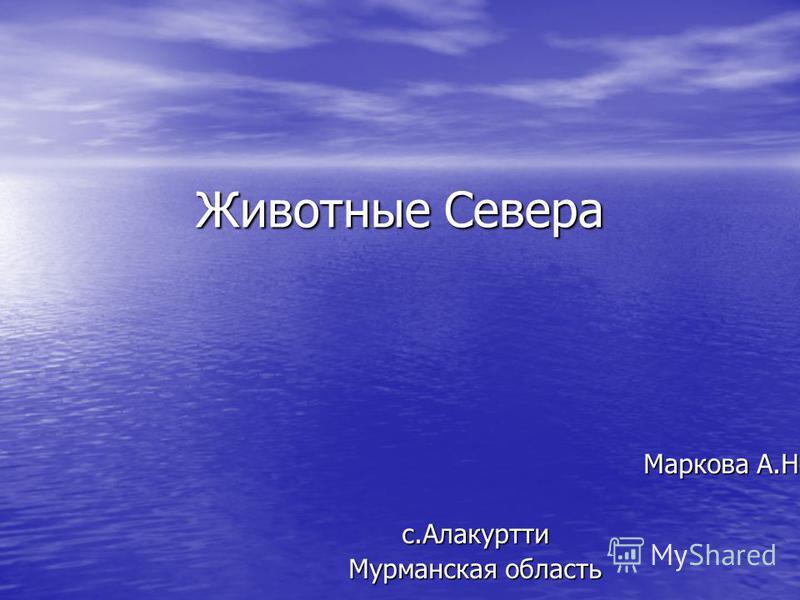 Животные Севера Маркова А.Н. Маркова А.Н.с.Алакуртти Мурманская область