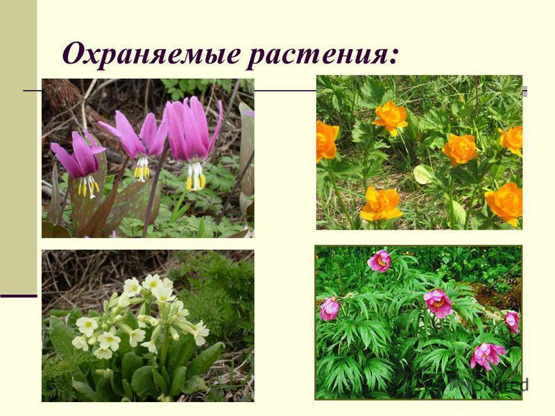 Охраняемые растения:
