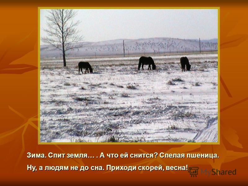 Зима. Спит земля…. А что ей снится? Спелая пшеница. Ну, а людям не до сна. Приходи скорей, весна!