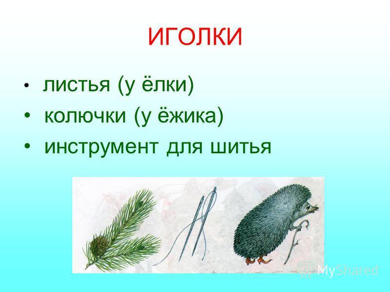 ИГОЛКИ листья (у ёлки) колючки (у ёжика) инструмент для шитья