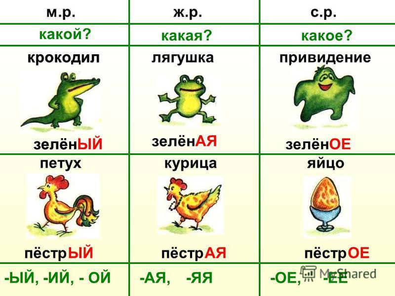 ж.р.м.р.с.р. какой? какмая?какот? крокодил зелёнЫЙ лягушка привидение зелён АЯ ОЕ петух курица яйцо пёстр ЫЙАЯОЕ -ЫЙ,-ИЙ, - ОЙ-ЯЯ-АЯ,-ОЕ,-ЕЕ