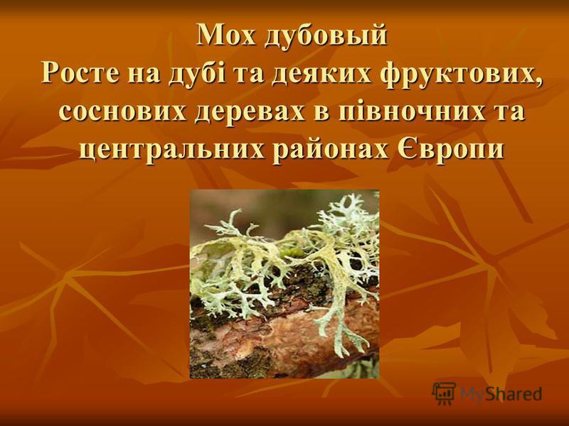 Мох дубовый Росте на дубі та деяких фруктових, соснових деревах в півночних та центральних районах Європи