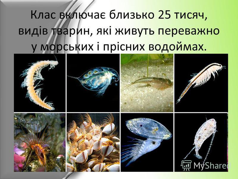 Клас включає близько 25 тисяч, видів тварин, які живуть переважно у морських і прісних водоймах.