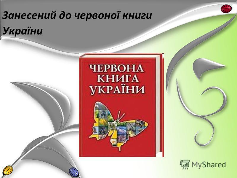 Занесений до червоної книги України
