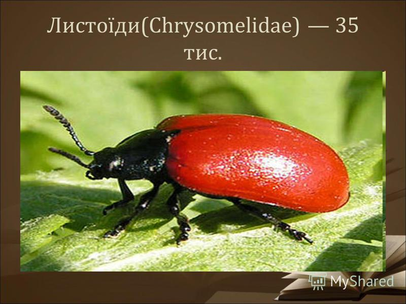 Листоїди(Chrysomelidae) 35 тис.