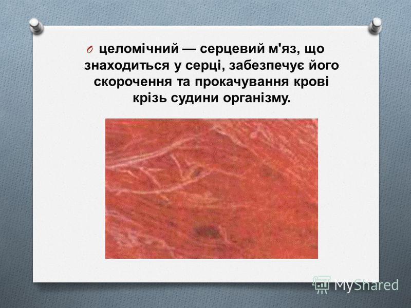 O целомічний серцевий м ' яз, що знаходиться у серці, забезпечує його скорочення та прокачування крові крізь судини організму.