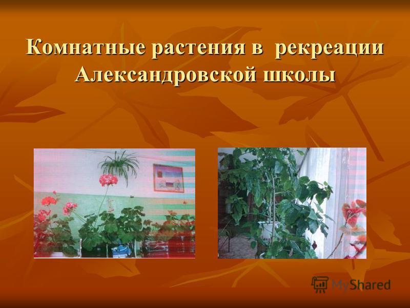 Комнатные растения в рекреации Александровской школы